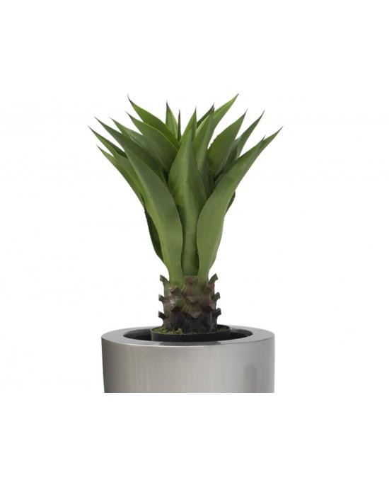 Agarve 85cm PLNT 1356 In VP574 Ornamental Pot Medium